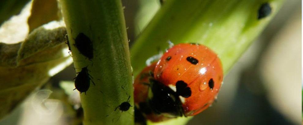 Herramientas naturales, bioindicadores, enemigos naturales y fauna auxiliar